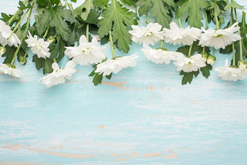 Crisântemos brancos em um fundo de madeira, em uma vista superior, com espaço vazio para a escrita ou a propaganda fotografia de stock royalty free