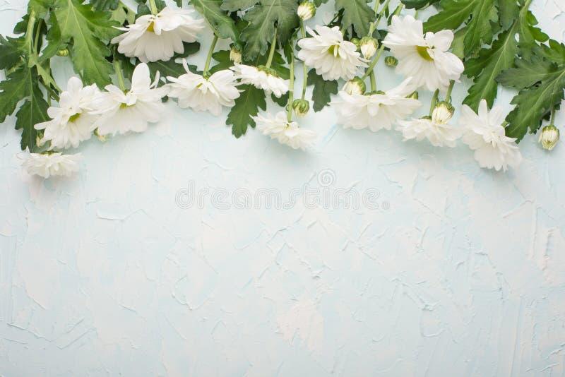 Crisântemos brancos em um fundo de madeira, em uma vista superior, com espaço vazio para a escrita ou a propaganda fotos de stock royalty free