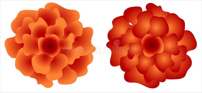 Crisantemi cinesi Isolato su priorit? bassa bianca per creare le strutture, le insegne e le carte illustrazione vettoriale
