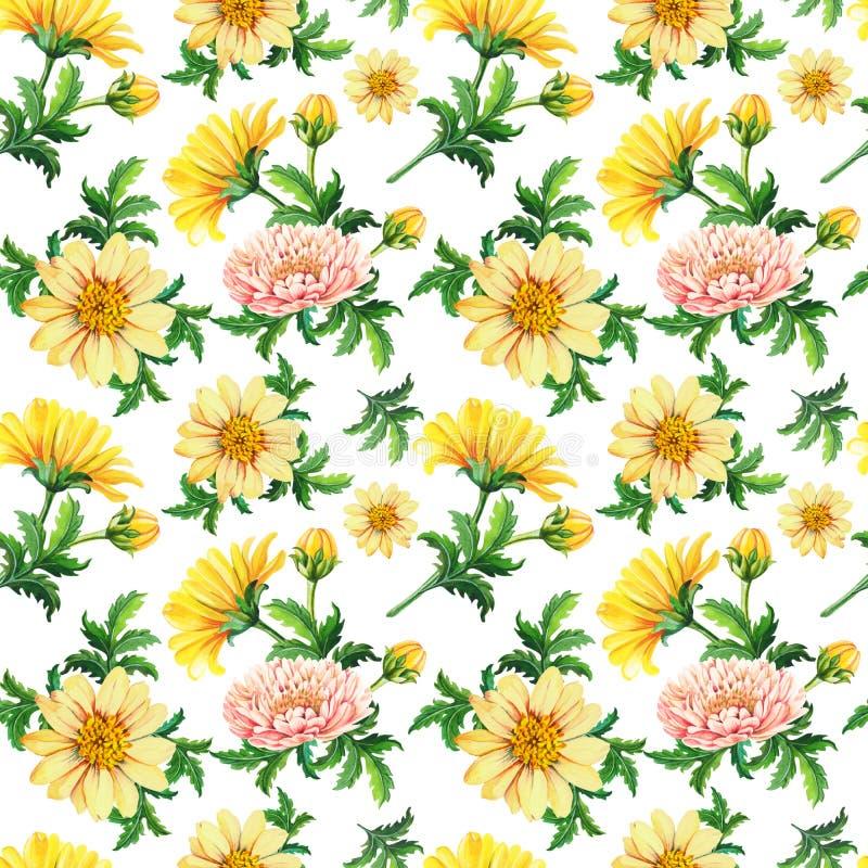 Crisantemi dell'acquerello su un fondo bianco Modello senza cuciture astratto dei fiori gialli illustrazione vettoriale
