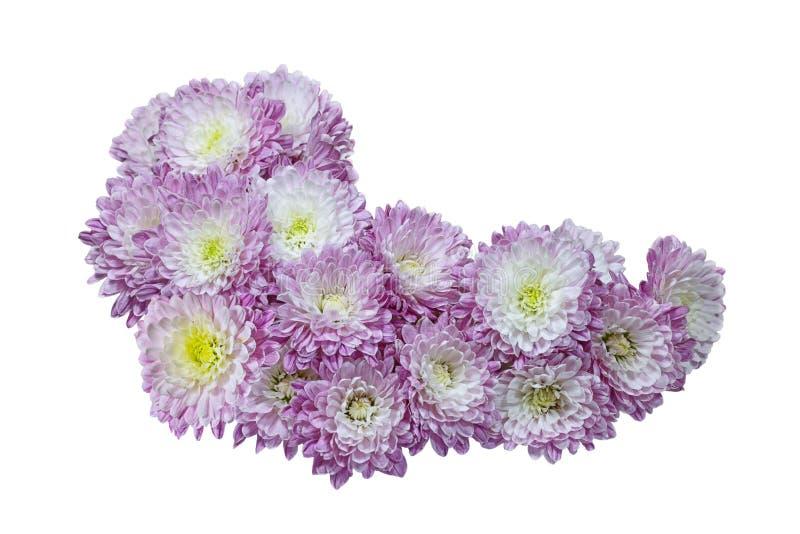 Download Crisantemi dell'aster immagine stock. Immagine di viola - 117980635