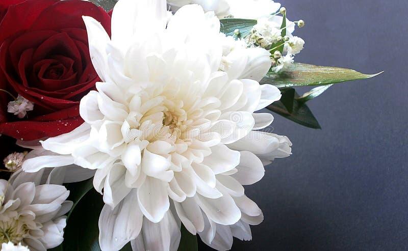 Crisantemi e rose fotografia stock libera da diritti