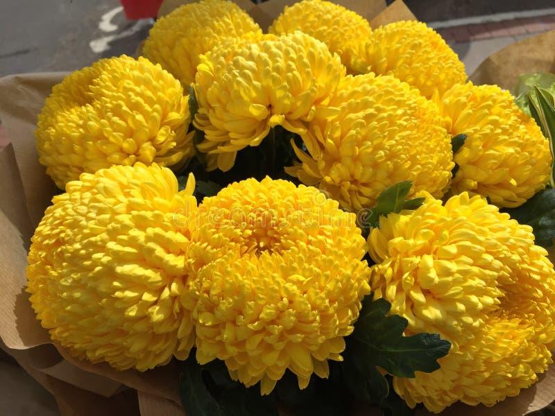 Crisantemi gialli immagine stock libera da diritti