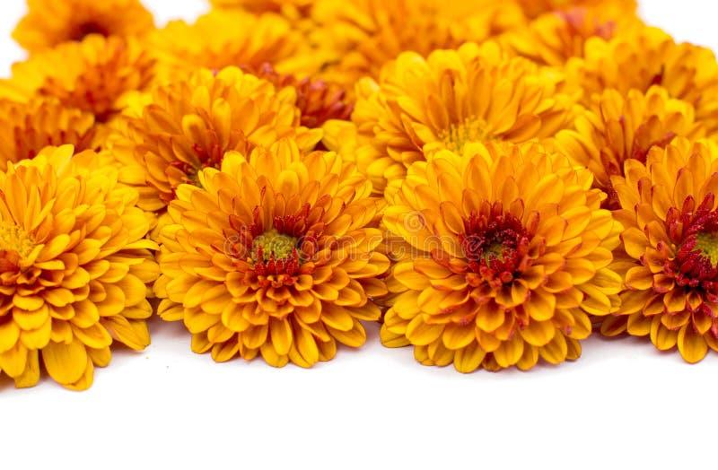 Crisantemi giallo arancione fotografia stock libera da diritti