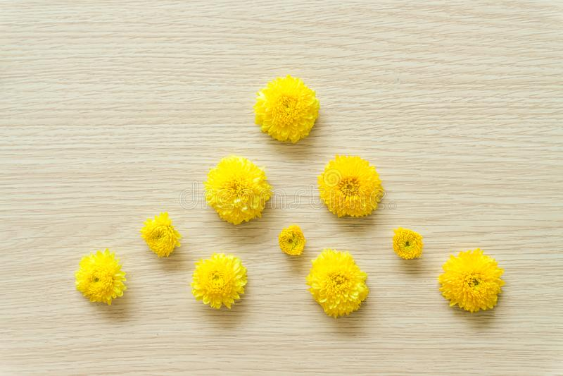 Crisantemo amarillo en un fondo de madera, espacio libre imagen de archivo
