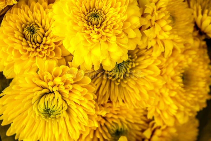 Crisantemo Amarillo Ramo Grande De Flores Amarillas Imagen