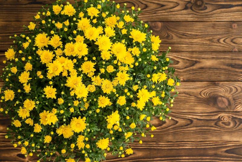 Crisantemo giallo fresco conservato in vaso di caduta fotografia stock libera da diritti