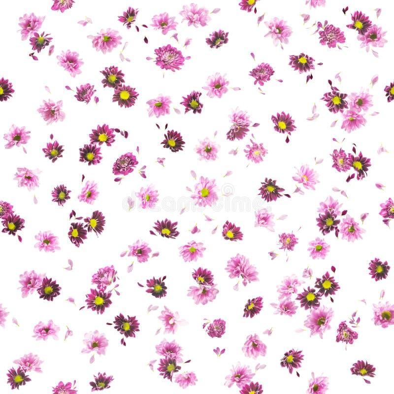 Crisantemo y Daisy Buds Pattern púrpuras foto de archivo