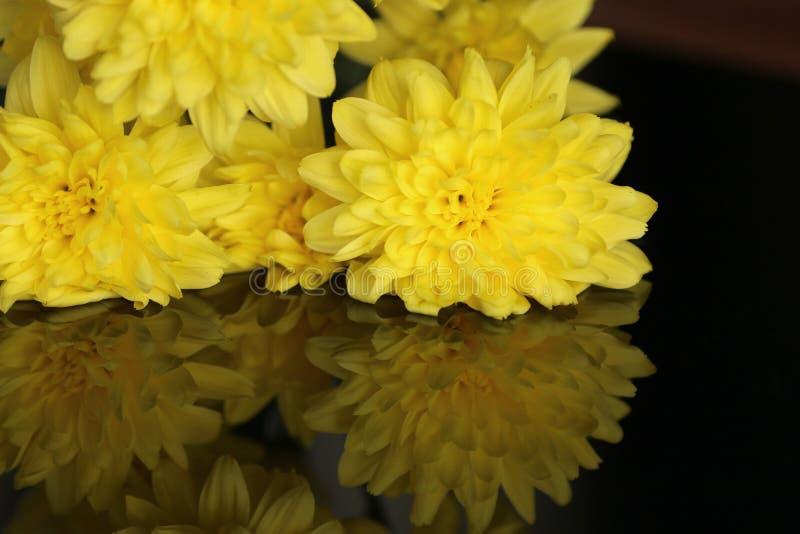 Crisantemos amarillos en la tabla reflexiva negra fotografía de archivo