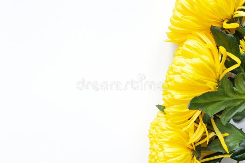 Crisantemos amarillos vibrantes en el fondo blanco Endecha plana horizontal Ubicación de la esquina derecha Maqueta con el espaci fotos de archivo libres de regalías