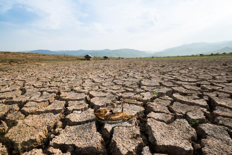 Crise inoperante do aquecimento global de terra seca dos peixes fotos de stock royalty free