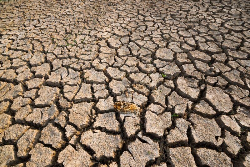 Crise inoperante do aquecimento global de terra seca dos peixes imagens de stock royalty free