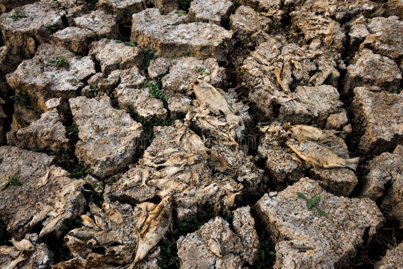 Crise inoperante do aquecimento global de terra seca dos peixes foto de stock