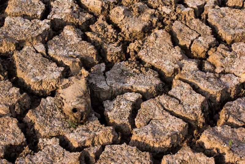 Crise inoperante do aquecimento global de terra seca dos peixes fotos de stock