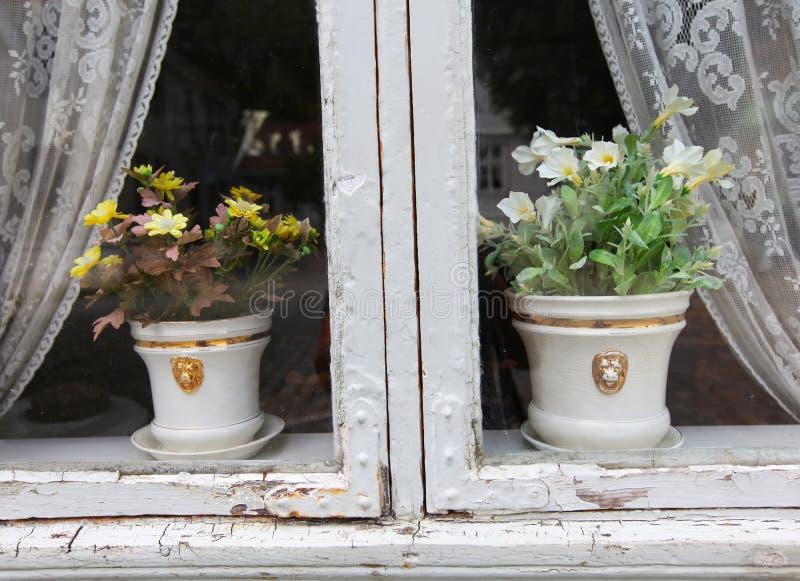 Crisoles de flor en la ventana con las cortinas imagen de archivo