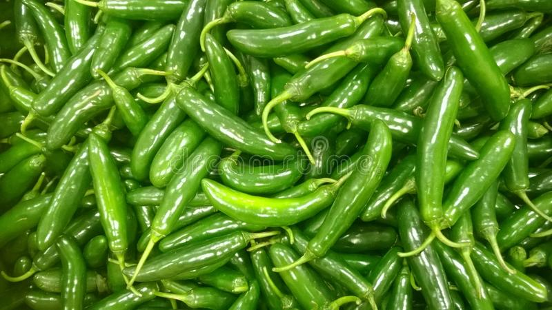 Crisp sweet and hot. Piquant bright and lively Serrano peppers royalty free stock images