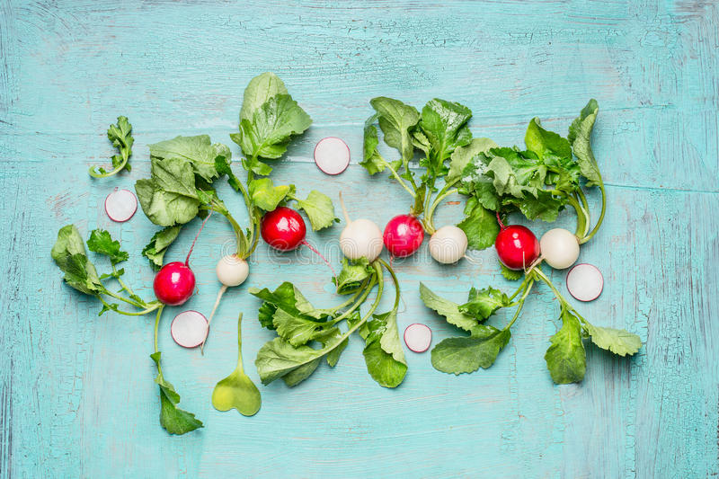 Crisp white and red radishes with leaves on light blue wooden background stock photography