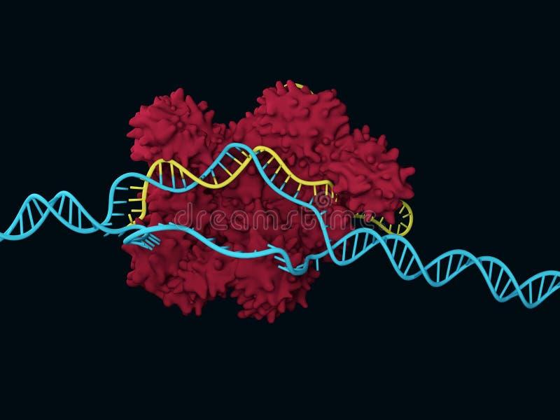 CRISPR-Cas9 illustrazione vettoriale