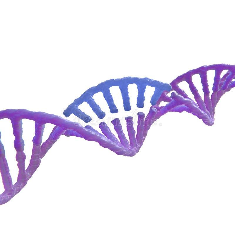 Crispr de la modificación de la DNA ilustración del vector