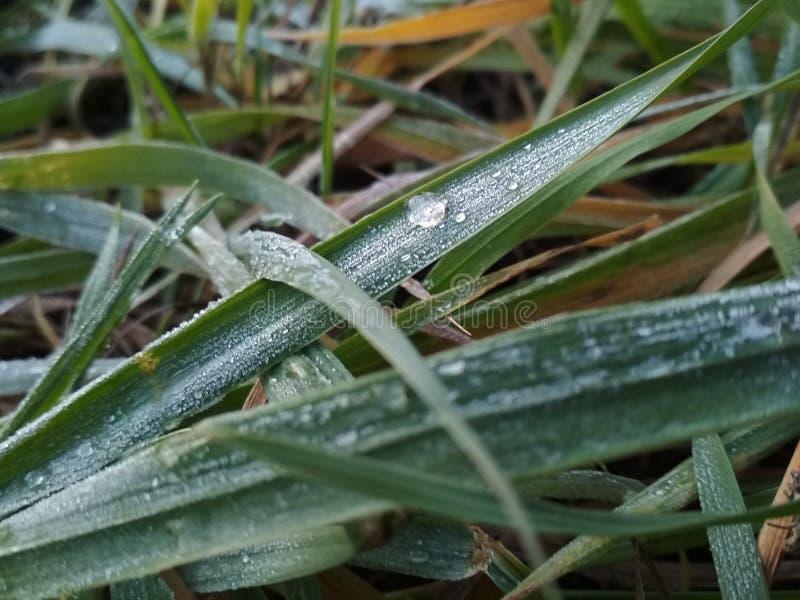 Cristais de gelo em uma manhã do outono imagem de stock royalty free