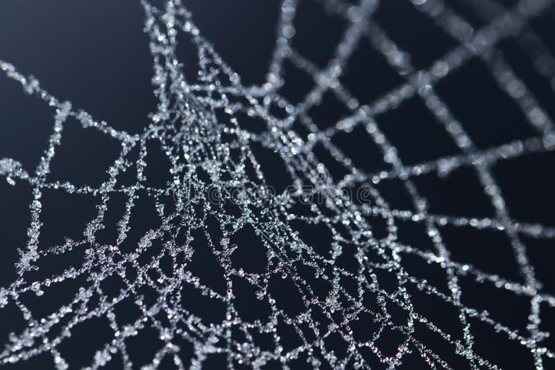 Cristais de gelo na Web de aranha congelada imagem de stock