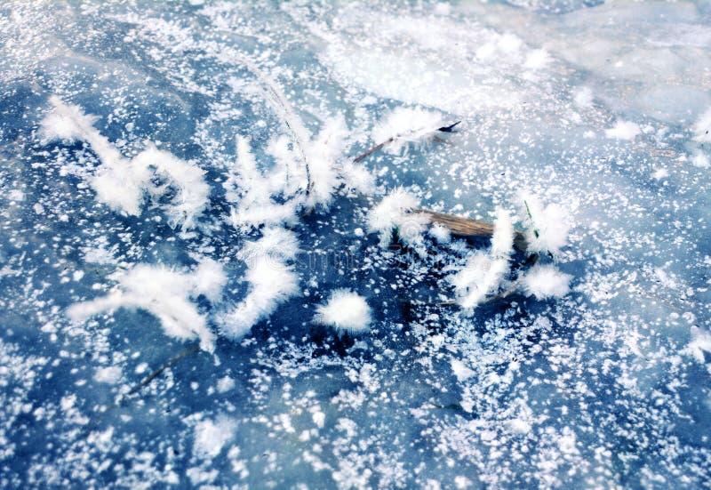 Cristais no gelo como penas do egret imagens de stock royalty free