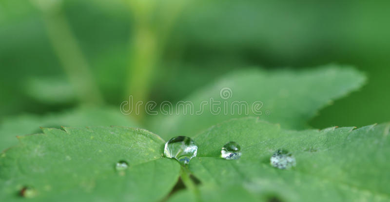 Download Cristal clear drops stock photo. Image of couple, limpid - 20849648