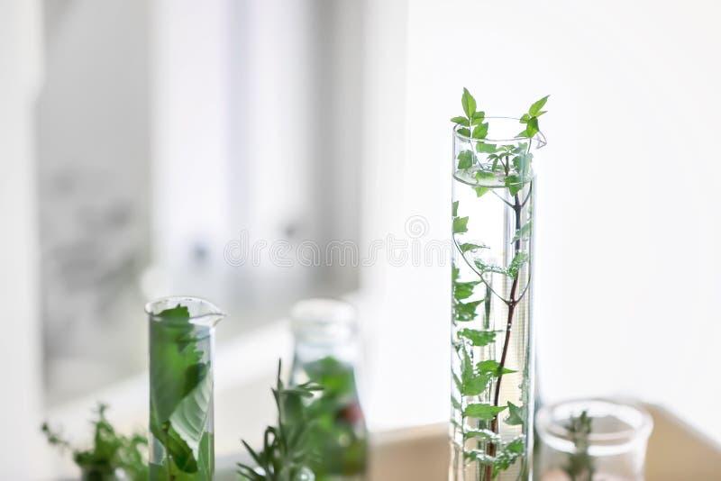 Cristalería con las plantas en laboratorio foto de archivo