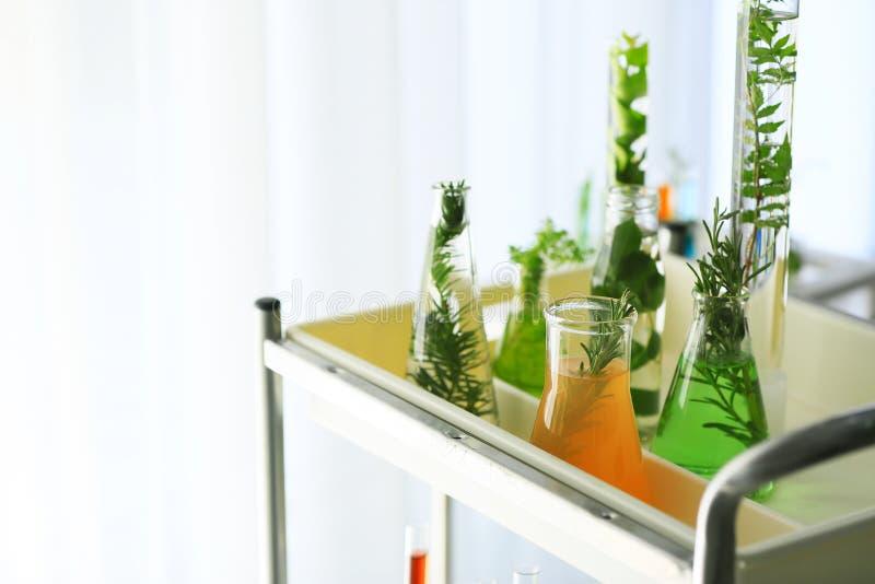 Cristalería con las plantas y los líquidos en estante en laboratorio imagen de archivo libre de regalías