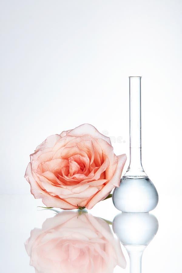 Cristalería y flor de laboratorio en el fondo blanco foto de archivo libre de regalías