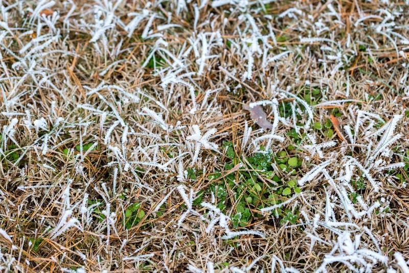 Cristales de hielo en hierba y hojas verdes Fondo escarchado de la naturaleza de la hierba Foco selectivo imágenes de archivo libres de regalías