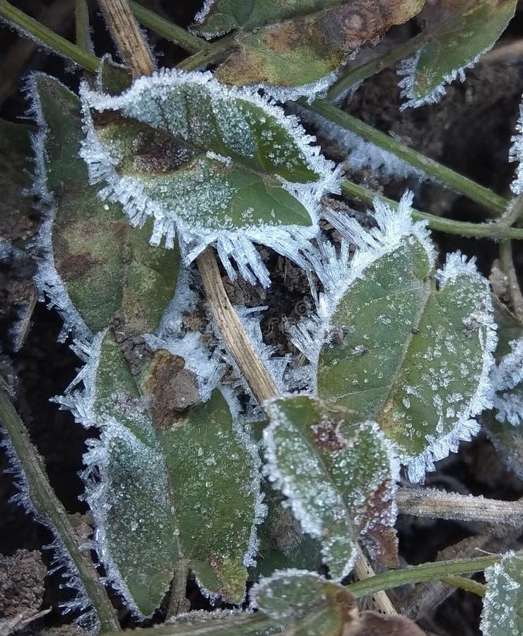 Cristales de hielo en las hojas fotos de archivo