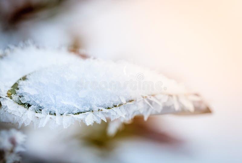 Cristales de hielo que cubren las hojas después de tormenta de hielo imagen de archivo