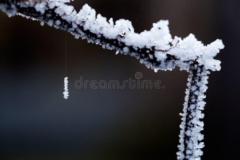 Cristales de hielo que cuelgan en una araña de seda fotos de archivo libres de regalías
