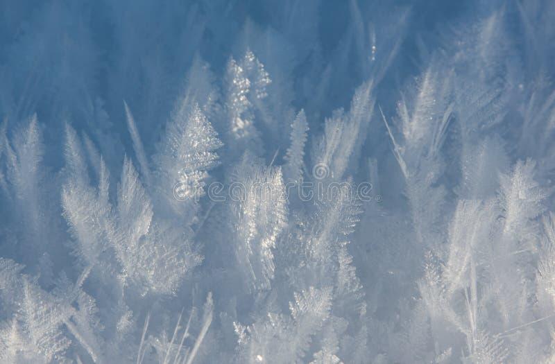 Cristales de hielo que parecen las plantas foto de archivo libre de regalías