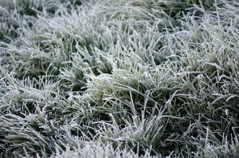 Cristales de la escarcha en las hojas de la hierba verde fotografía de archivo libre de regalías