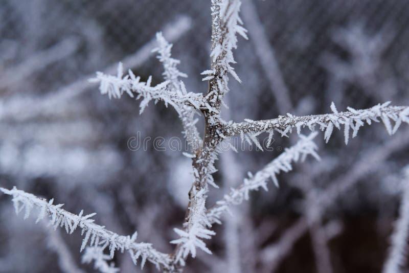Cristales del hielo en una rama, naturaleza hermosa imagen de archivo