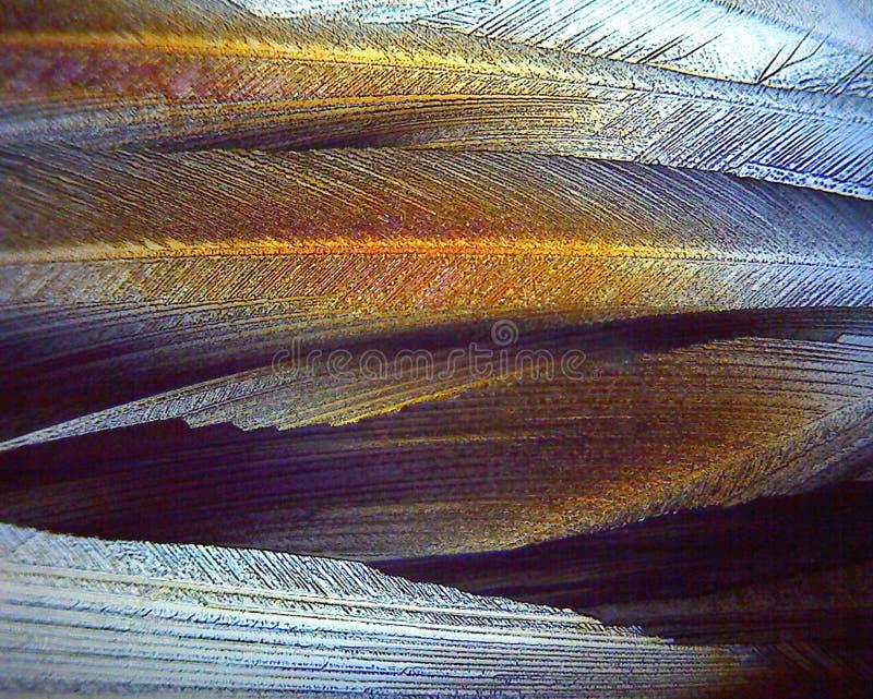 Cristales del X.400 del Sweetner bajo luz polarizada fotos de archivo libres de regalías