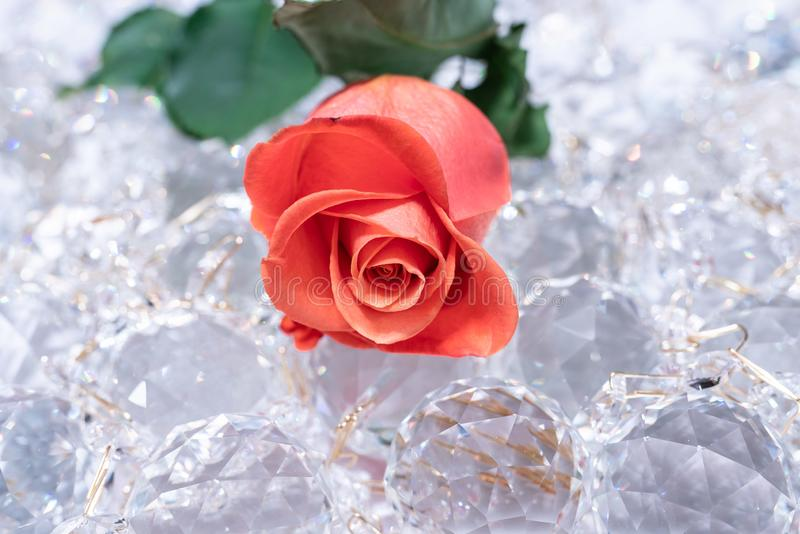 Cristalli scintillanti con la rosa rossa su loro immagine stock libera da diritti