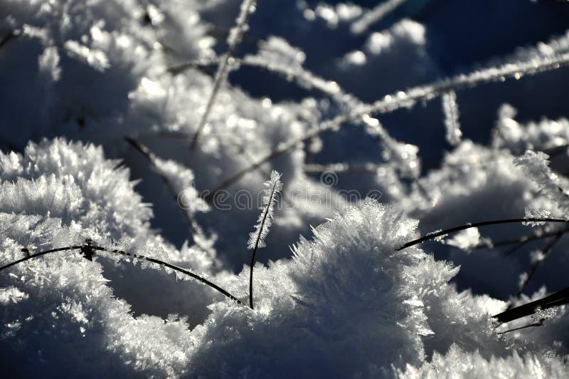 Cristaux de glace et usines congelées à l'hiver photos libres de droits