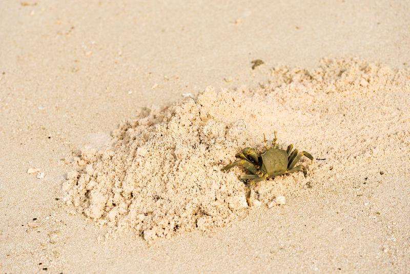 Critique despiadadamente en una playa arenosa, Maldivas, el Océano Índico Copie el espacio para el texto fotografía de archivo libre de regalías