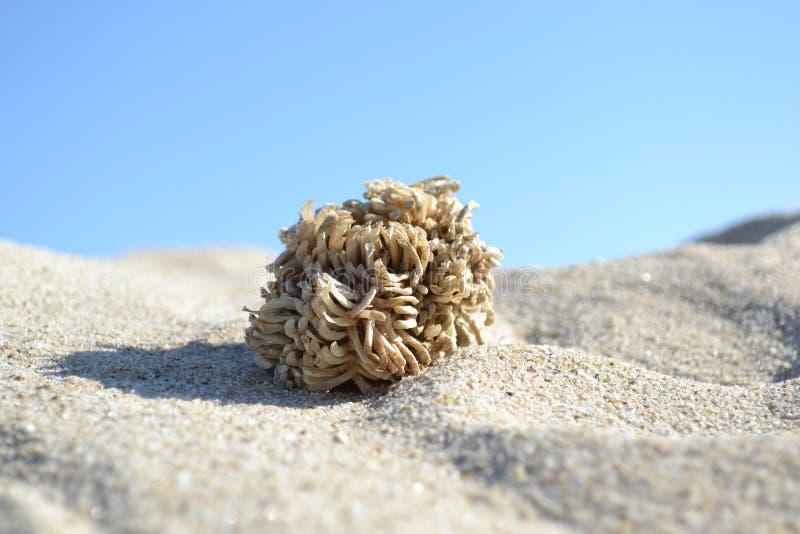 Critter моря стоковое фото rf