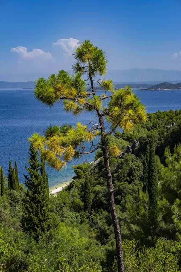 Croácia da ilha de Korcula, Dalmácia imagem de stock royalty free