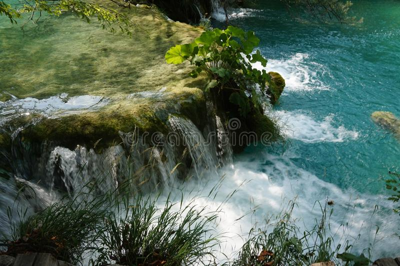 Croácia dos lagos Plitvice do parque nacional - uma cachoeira pequena e uma planta nele fotos de stock