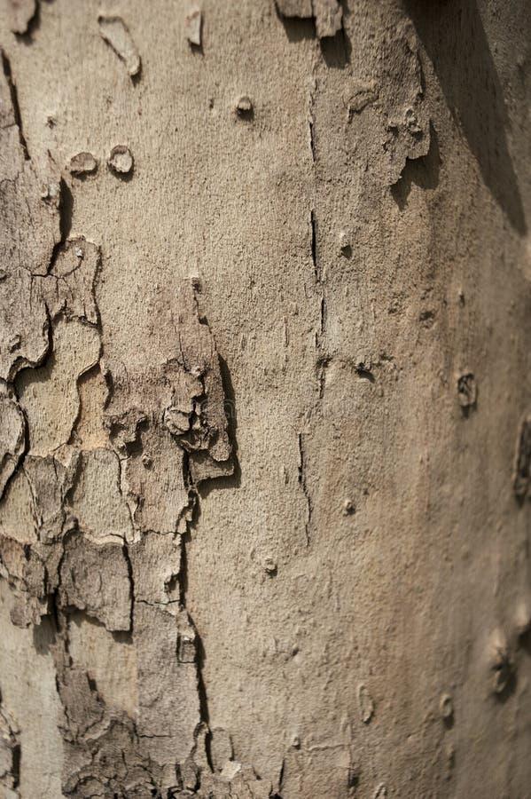 Croûte d'arbre de Brown photo libre de droits
