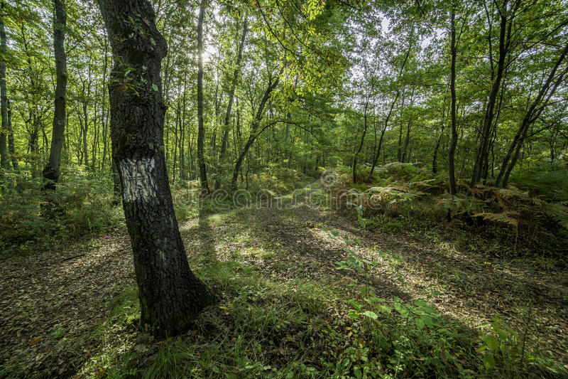 Croassroad de forêt images stock