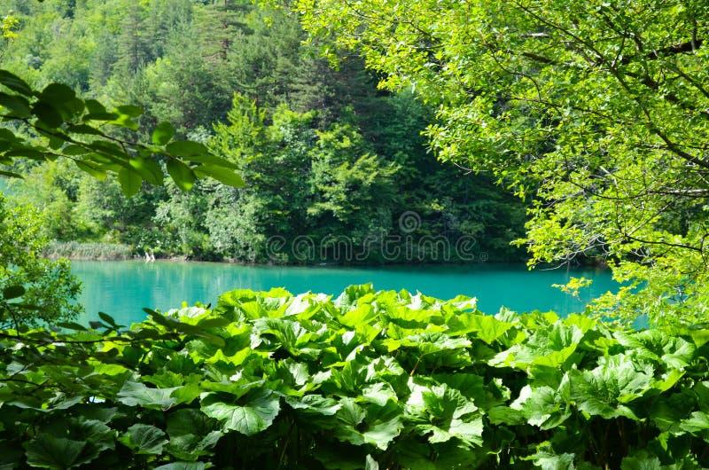 croatia lakesplitvice arkivfoto