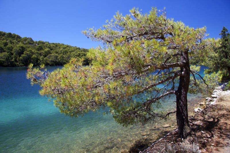 Croatia: Paraíso no console de Mljet imagens de stock