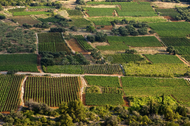 Croatia - Vineyards royalty free stock photos