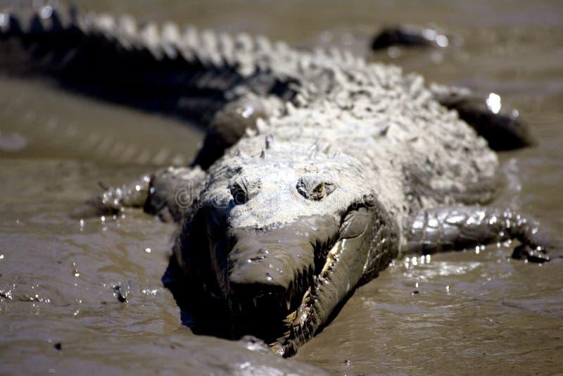 Croc 2 photographie stock